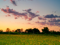 Yellow Coneflowers and Sunset Clouds, Cherokee Prairie